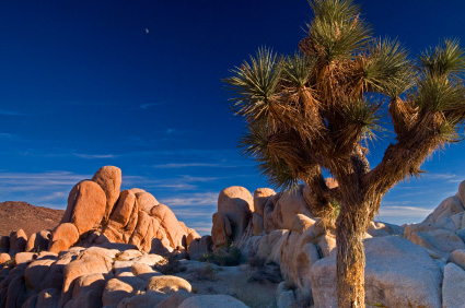 joshua-tree-np