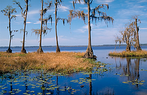 osceola-national-forest