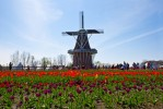 holland-michigan-tulip-festival