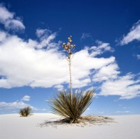 White-Sands-National-Monument-New-Mexico-USA